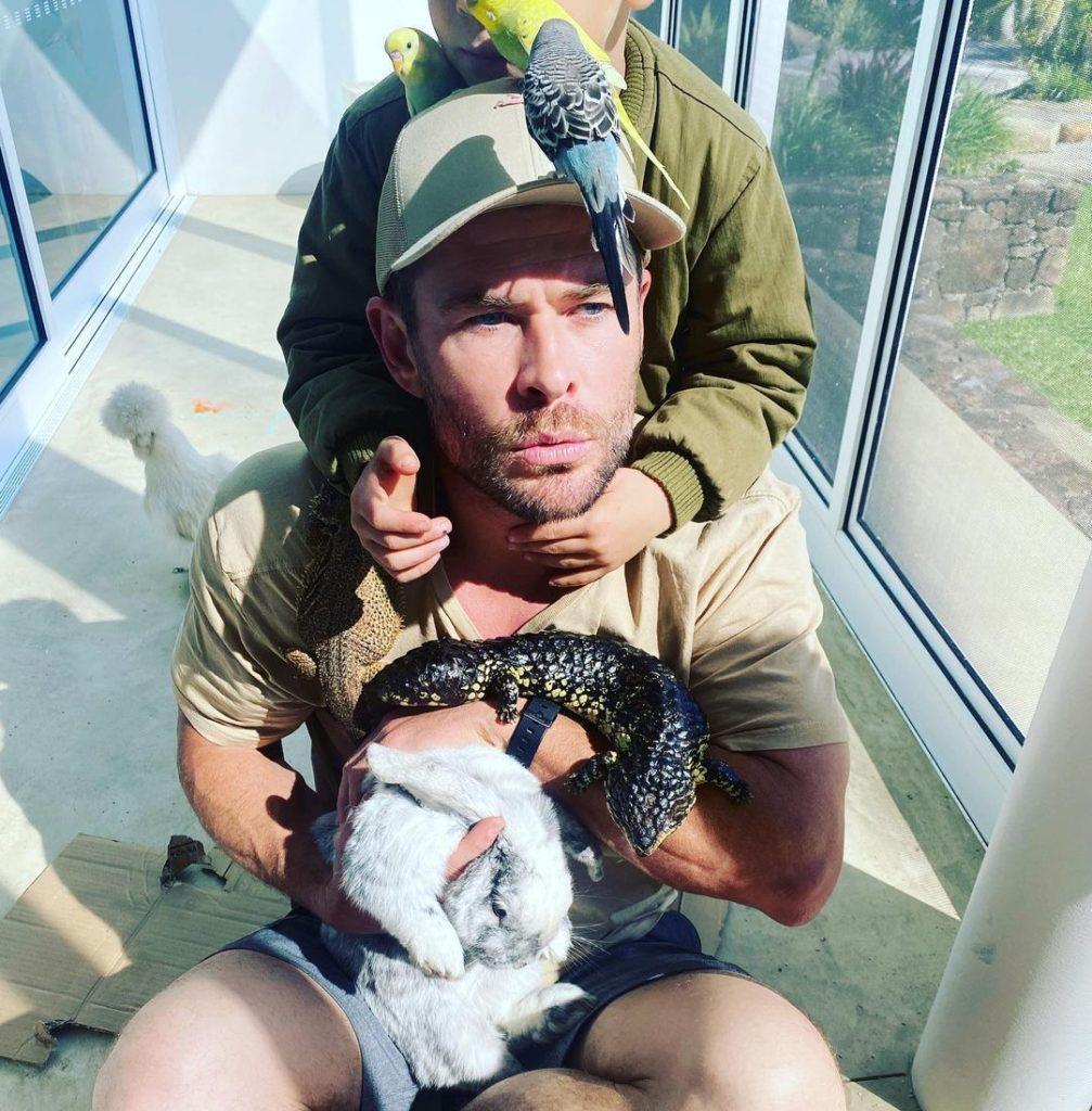 киноактер Крис Хемсворт с попугаями, ящерицами и кроликом. Смешное фото. Дом Криса Хемсворта.